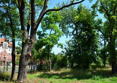 Roślinność parkowa na terenie inwestycji